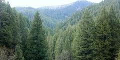 Консултации по управление и покупка на гори Самоков