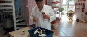 Лабораторни изследвания домашни животни в София-Люлин