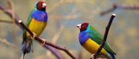 Лечение на паразитни болести по птици в Търговище