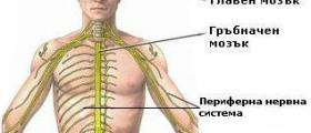 Лечение заболявания периферна нервна система във Варна