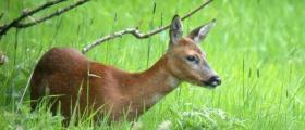 Лов на едър дивеч в Сатовча-Благоевград
