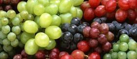 Лозарство и винарство в Силистра