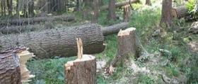 Намаляване риска от снабдяване с незаконна дървесина в София