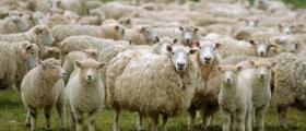 Научноизследователска дейност в животновъдство и земеделие в Троян