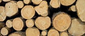 Отдаване дървесина на корен