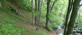 Отглеждане дървесни насаждения Чирпан