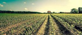 Отглеждане и събиране на зърнени култури в Долни Дъбник