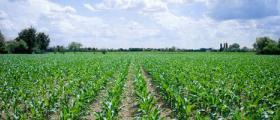 Отглеждане и търговия със земеделска продукция в община Свиленград и Харманли