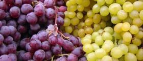 Отглеждане на грозде във Видин