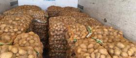 Отглеждане на картофи в Долни Чифлик-Варна