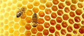 Отглеждане на пчели в Лесичово-Пазарджик