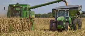 Отглеждане на царевица в Стефан Караджово-Болярово