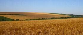 Отглеждане на земеделска продукция в Чернолик-Силистра