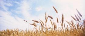 Отглеждане на земеделски култури в Добрич
