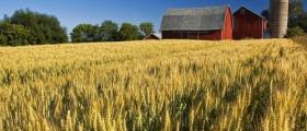 Отглеждане пшеница в Монтана