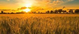 Отглеждане зърнени култури в Болярово