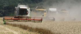 Отглеждане зърно в Област Добрич