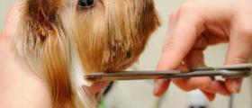 Подстригване кучета във Варна