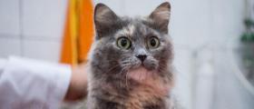 Подстригване на котка в град Варна
