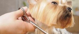 Подстригване на котки и кучета във Варна