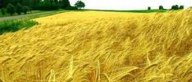 Покупко-продажба земеделска земя в Южна България