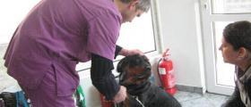 Поставяне на микрочипове в Стара Загора - Ветеринарна клиника Стара Загора