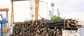 Превоз на дървени трупи в Асеновград