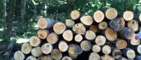 Продажба дърва за огрев в Дулово