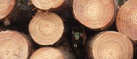 Продажба дървесина от склад