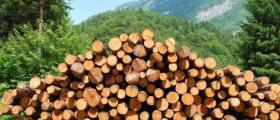 Продажба на дървесина в Сандански