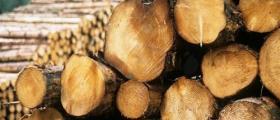 Продажба на дървесина в Сатовча-Благоевград