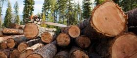 Продажба на дървесина в Силистра