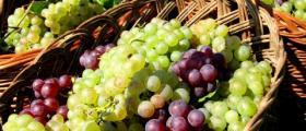 Продажба на грозде в Любимец-Хасково