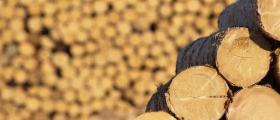 Продажба на прогнозни количества дървесина
