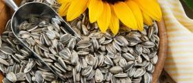Продажба на семена за технически култури в Долни чифлик-област Варна