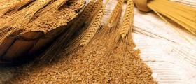 Продажба на зърно в Любимец-Хасково
