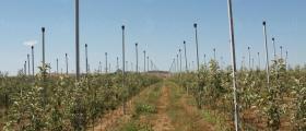 Проектиране градини и лозя в Бургас