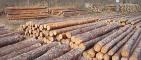Производство дървен материал в Дулово