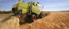 Производство и търговия с пшеница в община Балчик - Кооперация Гурково