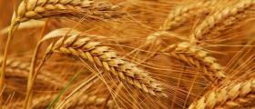 Производство и търговия със селскостопанска продукция Кнежа - ППЗК Прогрес