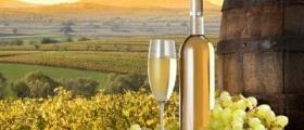 Производство на бяло и червено вино Сороко Поморие