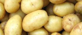 Производство на картофи в Долно Церовене-Якимово
