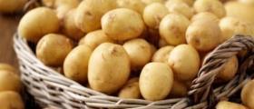 Производство на картофи за семе в Банско