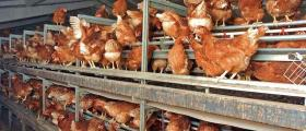 Производство на подрастващи стокови носачки в Павликени - Хайпро България ООД