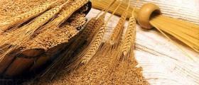 Производство на пшеница в Гъмзово-Брегово