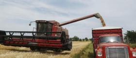 Производство на пшеница в Каварна