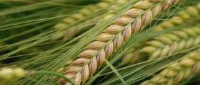 Производство на селскостопанска продукция в Баня-Карлово