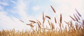 Производство на селскостопанска продукция в Бургас - ЗКПУ ТРАКИЯ Горно Езерово