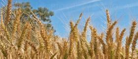 Производство на селскостопанска продукция в Ихтиман