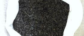 Производство на слънчогледови семена в Дулово